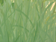Nursery Mural (Tall Grass Detail)